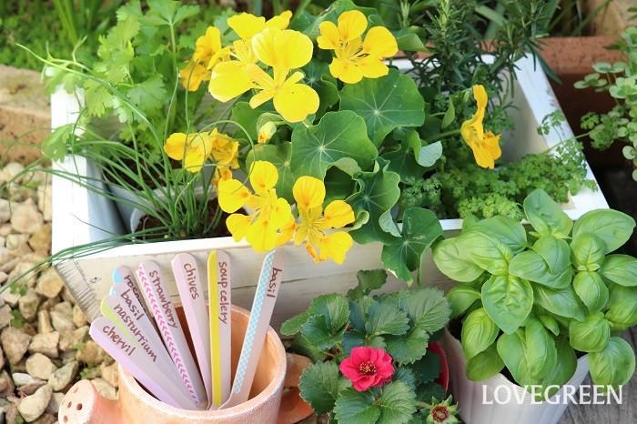 いつもの料理にハーブを取り入れると、彩りや香りがプラスされて見た目も美味しさも、そして栄養もアップします。収穫したハーブを部屋に飾ると、可愛い花と爽やかな香りに癒されます。ハーブを育てて庭やベランダで収穫できたら気軽に使えていいですよね。ぜひ、ハーブをお楽しみください。