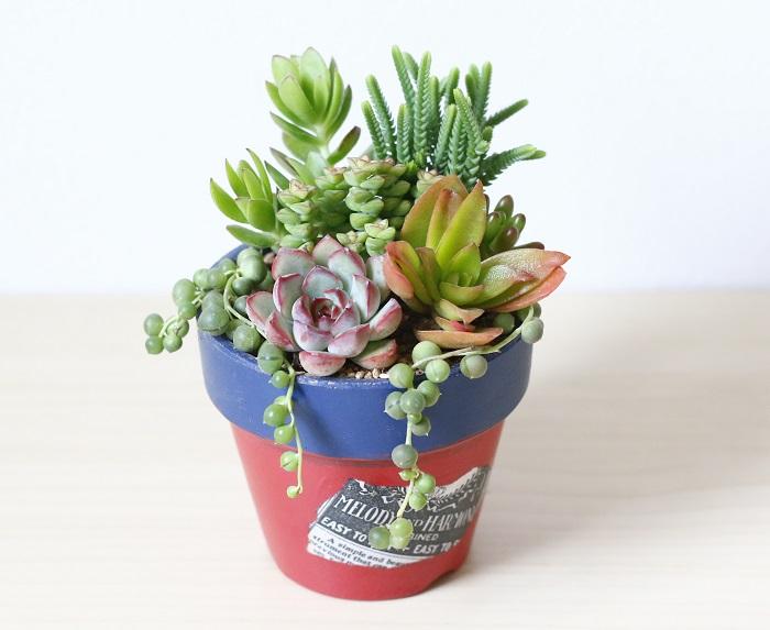 多肉植物は葉や茎などに水分をためておくことができ、葉が肉厚でぽってりとした印象の植物のことです。花月、虹の玉、乙女心などがあります。