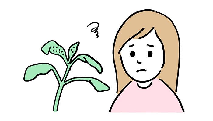 観葉植物に虫が発生してしまったら?