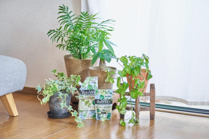 観葉植物の育て方、一番大切なのは、植物を日々よく見てあげること