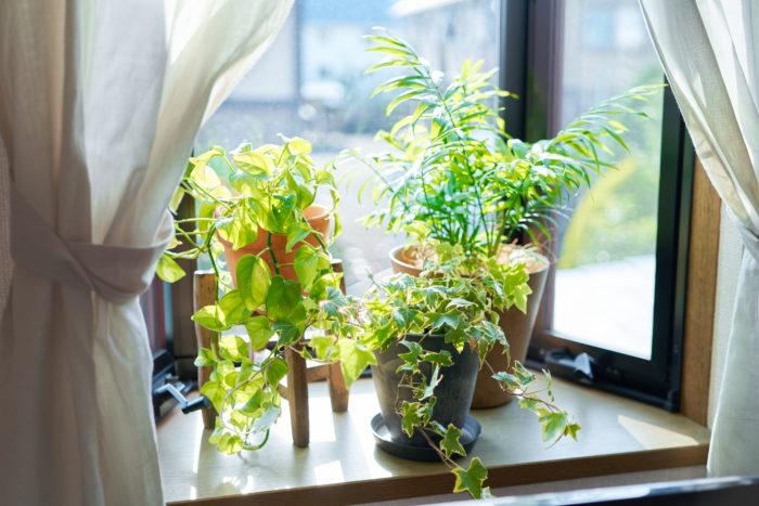 観葉植物の置き場所はどこがいいの?