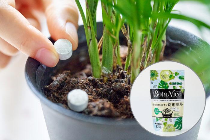観葉植物に「BotaNice 置くだけ!カンタン錠剤肥料」