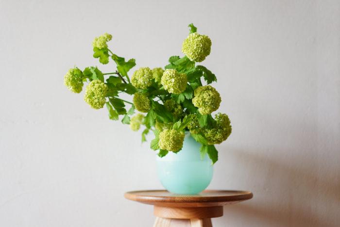 """飾り方は、""""スノーボール""""だけでどさっと活けるのもオススメです。  一つの枝にいくつもの花を咲かせるため、数本で十分なボリュームがでます。初夏の梅雨時期らしく、涼やかな色のフラワーベースと合わせるのもオススメです。口の広い花瓶にやや傾けて飾ってあげるとちょっと優しい雰囲気に。数本あるならそれぞれの長さを変えてあげると、お花のボリューム感が調整できます。"""