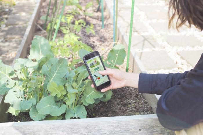 家庭菜園の病害虫を写真で自動診断!「ガーデンドクターAI(アイ)」