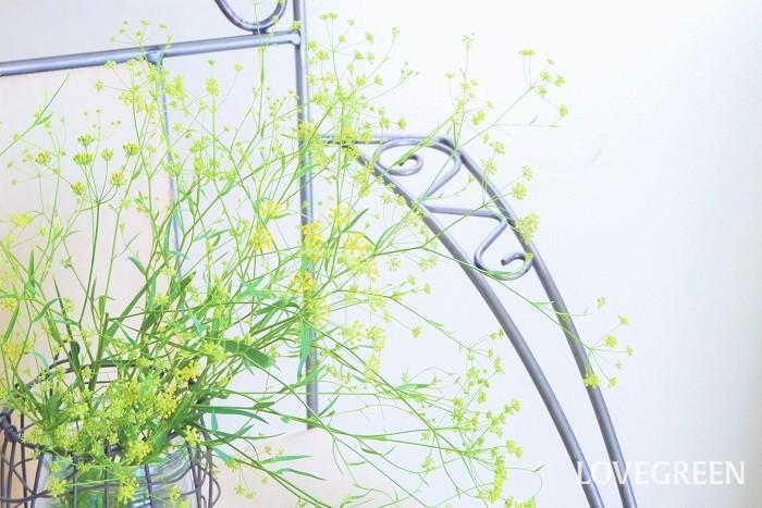 口の広い花瓶に広がるようにどっさりと1種類の花だけを飾っても絵になります。