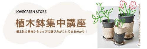 観葉植物の植え替えにも使える植木鉢集中講座