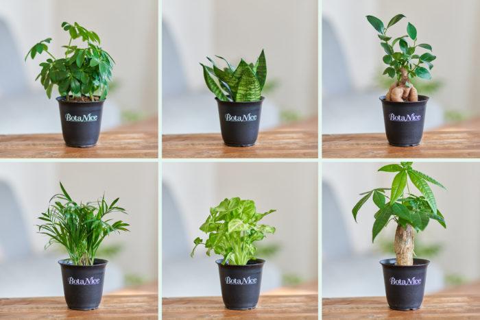 まずはこの品種から!育てやすいミニ観葉をセレクト