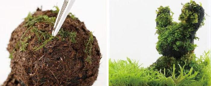 そこに水草のタネをまいたり、苔をつければ、自分だけの景色の完成!