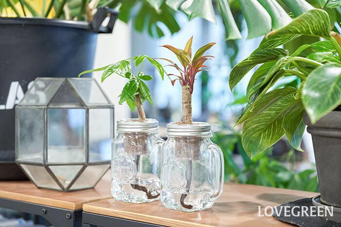 鉢底穴が必要ないので、好きな容器に植物を植え替えて、インテリアとしても空間をおしゃれに演出できます。  出窓や机の上のちょっとしたスペースにグリーンを飾りたいという方にもおすすめです。お部屋に植物があることで、お部屋の雰囲気がフレッシュになりますよ。日々植物を眺めることによって、リラクゼーション効果もあるはず。