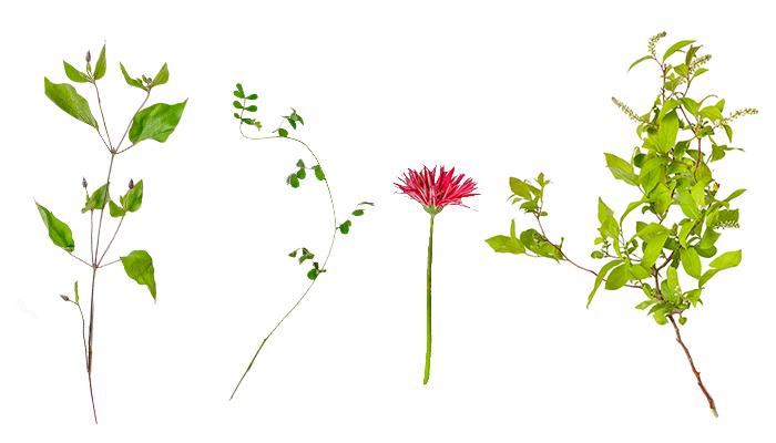 使用した花材はこちら。  左から  クレマチス(蕾) コロニラ ガーベラ 姫リョウブ ガーベラ以外の花材はお花屋さんで購入しました。