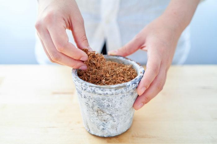 多肉植物専用「ベラボン・サキュレント」の使い方