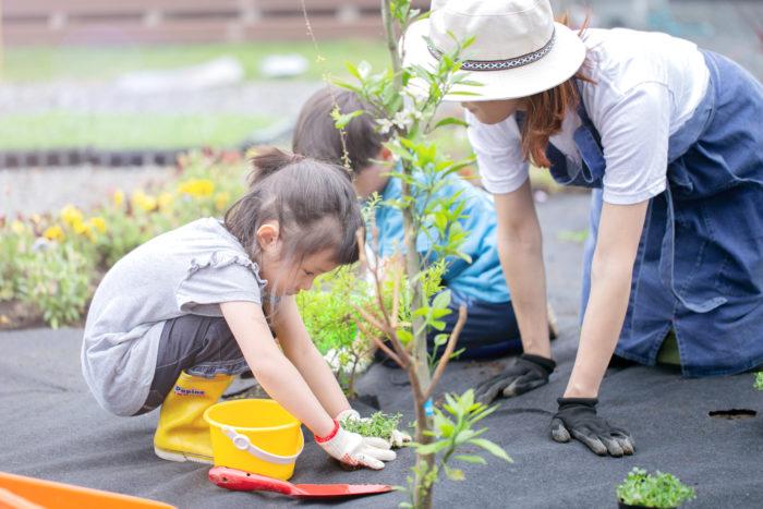 クラピアを植える選択が、サステナブルな庭づくりの第一歩に