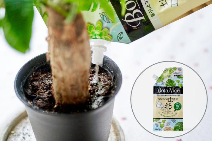 観葉植物のアブラムシに「BotaNice 土にまくだけ虫退治」がおすすめ!