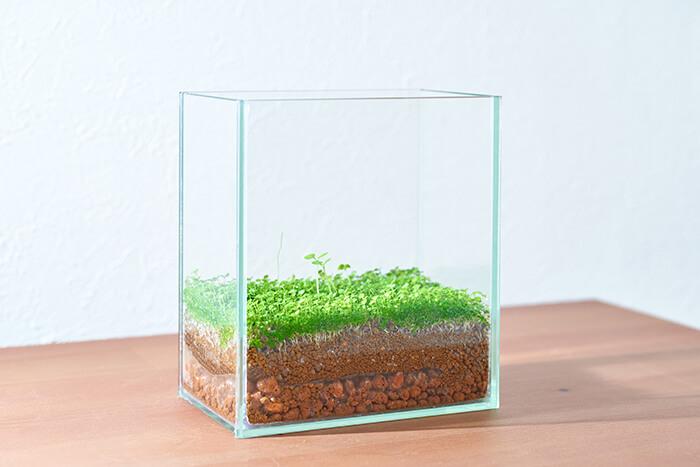 タネから育てた水草がこんなにイキイキと生長してくれました!部屋に置いて日々観察していたので、愛着が湧きます。インテリアとして部屋に置いても、涼しげで可愛らしいですよね♪