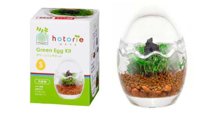 お子さんと一緒に、もっとライトに楽しみたい!という方には、「ほとりえグリーンエッグキットS」がおすすめ。タマゴの殻の形の容器で、小さく手軽な水草栽培が楽しめますよ♪