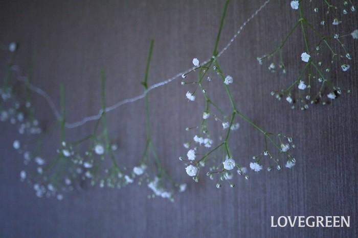 かすみ草のドライフラワーの作り方 かすみ草を好きな長さに切り分ける 直射日光を避け、風通しの良い場所に吊るす 7日~14日程度で出来上がり かすみ草のガーランドの作り方 かすみ草の花を小分けにして紐に並べて吊るしておけば、そのままドライフラワーのガーランドとして飾ることができます。  かすみ草のドライフラワーの飾り方 かすみ草のドライフラワーが出来上がったら、好きなところに飾りましょう。  ドライフラワーは湿気でカビが生えることがあります。また直射日光は褪色を早くします。直射日光と湿気を避けてください。浴室のような湿気の多い場所は避けましょう。  かすみ草のドライフラワーは壁や天井から吊るしても、テレビボードの上などに寝かして置いても飾れます。  かすみ草のドライフラワーが茶色くなったら かすみ草のドライフラワーは数か月で褪色し、茶色に変化していきます。ドライフラワーは永久に姿を変えないものではありません。「きれいじゃない」と思ったタイミングが交換時です。  茶色く褪色したドライフラワーは時間の経過を感じさせるアイテム。そのアンティークのような雰囲気も楽しんでみてください。