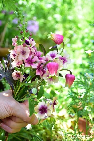 切り花にもなり、最近は花市場でも見かけます。写真は同じ季節に咲く、壺型のクレマチス、バーバースカム、フロックスのガーデンブーケ。