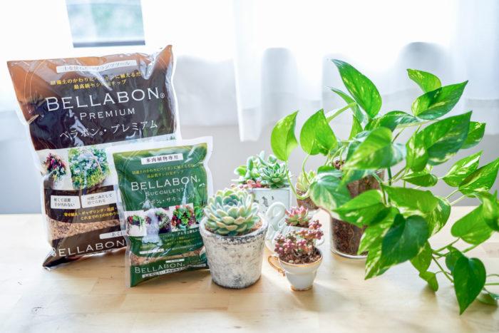 土に代わるベラボンを使って手軽に快適な植物のある暮らしをはじめてみませんか?