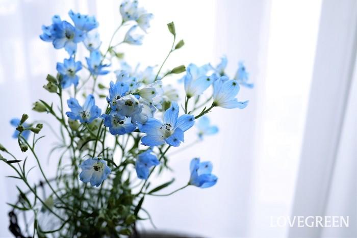 目にも涼やかなデルフィニウムを自宅で花瓶に生けてみましょう。  生け方 デルフィニウムの生け方は、必ず下の方の葉を取ること。水に浸かる部分に葉が付いていると、水が腐る原因になります。さらに葉が密集しているような場合には蒸れの原因にもなります。自宅でデルフィニウムの切り花を生ける時には、下半分くらいは葉を取ってしまいましょう。  水の量 デルフィニウムを花瓶に生ける際の水の量は、花瓶の1/3程度で十分です。水が多過ぎると浸かっている部分の茎が腐りやすくなります。長持ちさせるためにこまめに水を取り替えましょう。特に夏は毎日水を取り替えるようにしてください。  水に浸かる部分の葉を取り除くことも長持ちさせるコツです。