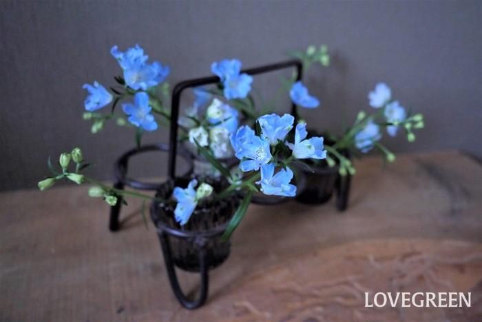 デルフィニウムの花言葉を紹介します。 清明 高貴 涼やかで豪華なデルフィニウムらしい花言葉です。
