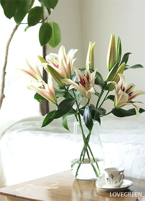 香りの良い百合(ユリ)は華やかにお部屋を彩ってくれますよ。日々の暮らしに彩りを。お気に入りの花を探しに花屋さんへ立ち寄ってみませんか。