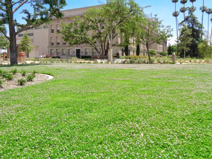 雑草を抑制するグランドカバーとしても超優秀なクラピア