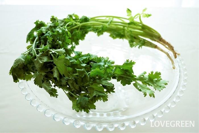 パクチーはセリ科の野菜です。コリアンダーや香菜とも呼ばれます。アジアの食べ物のようなイメージですが、ヨーロッパでも昔から食べられていました。