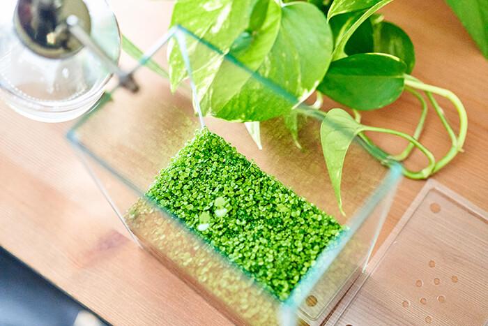 「ほとりえ」は、名前の通り、水辺のほとりの風景をガラス水槽のなかで再現して楽しめるキットです。スペースを取らない小さな水槽のなかで水草をタネから育て、豊かな緑の世界を自分で作り上げていく、新しいインドアグリーンの楽しみ方なんです。