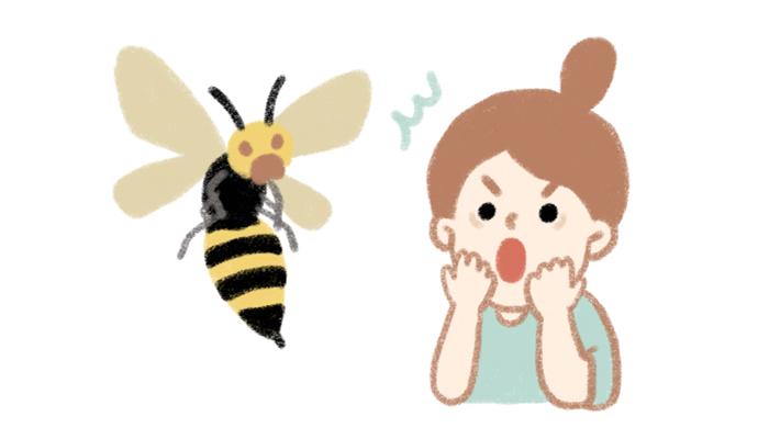 7月~10月に被害が増大!死者がでるほど危険なスズメバチ