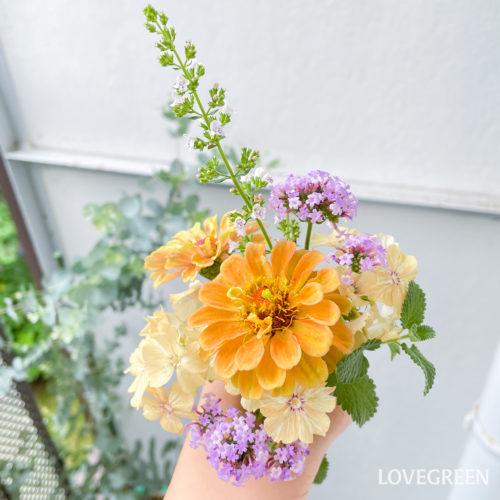 カラミンサ・ネペタは花茎がすっと伸びているので、切り花としてあしらいにも使用しやすいです。自宅のベランダで育てている花を使って、小さなブーケを作ってみました♪