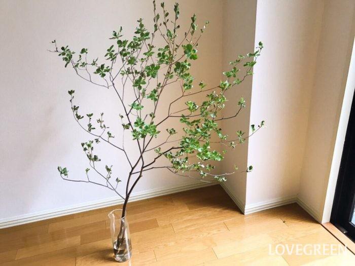 ドウダンツツジは涼し気な枝ぶりが美しい枝ものです。大きくドウダンツツジだけで生けても、他の花に添えるようにしても絵になります。
