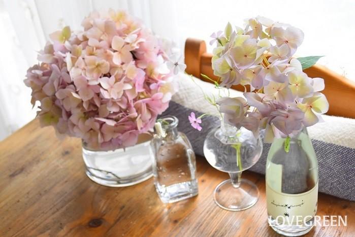 四季咲きアジサイの特徴と魅力