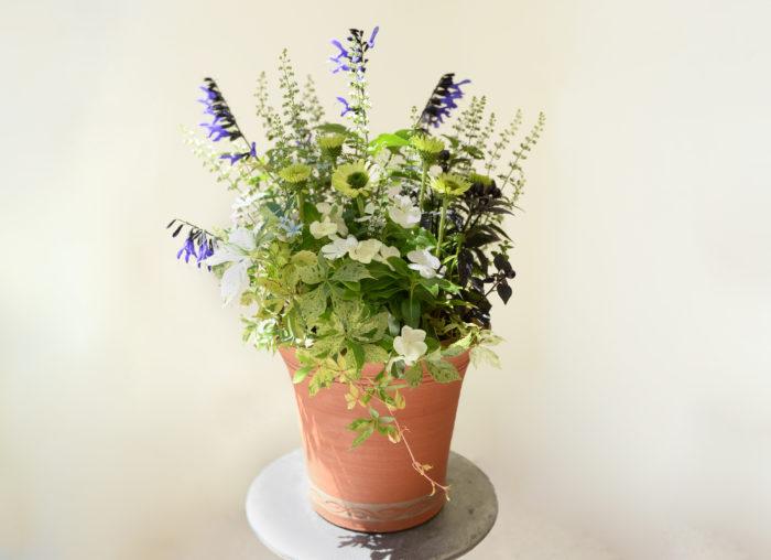 カラミンサ・ネペタの小花はどんな花とも合わせやすいため、花壇や寄せ植えのメインの花を引き立てるわき役の花苗としてとても人気があります。爽やかな雰囲気に仕上がるのでおすすめです。