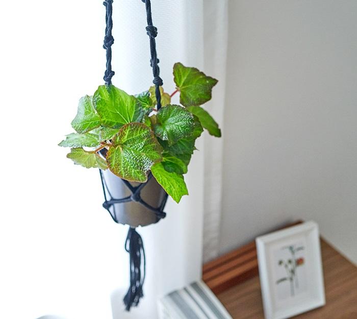 花を咲かせる観葉植物ベゴニアの中でも、オロココは丈夫なので初心者の方にもおすすめの観葉植物です。  置き方は、部屋のインテリアに合わせて吊るしても置いてもOKです。たまに水やりを忘れても育ってくれます。