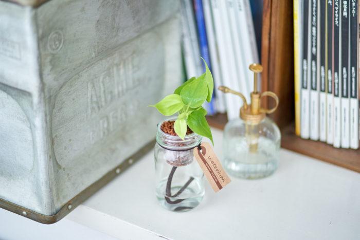 耐陰性が強く、窓際に置かなくても比較的生長するため、フィロデンドロンは初心者の方にもおすすめの観葉植物です。