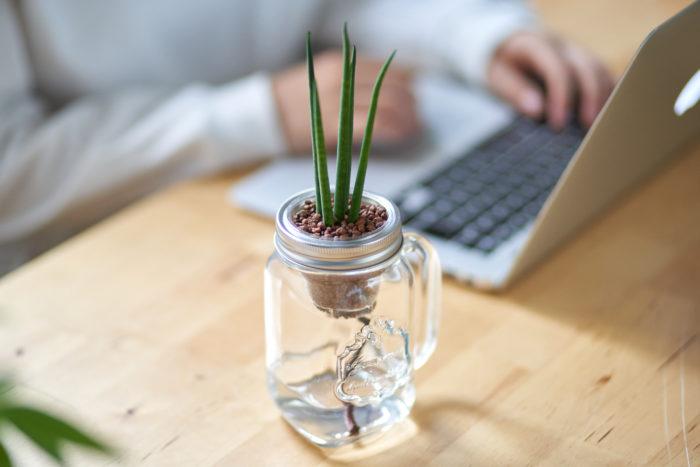 サンスベリアといっても種類が豊富な観葉植物。多少の日陰があっても育ってくれるので、日当たりが気になるお部屋にもおすすめです。