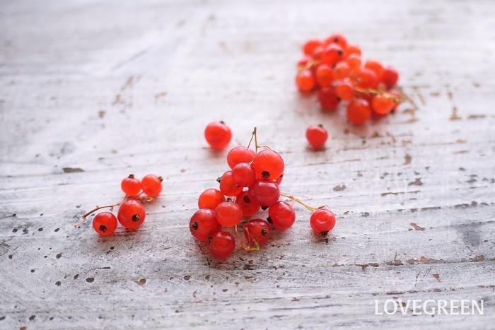 ベリ―類とは主に、水分を多く含む小さな果実のことを指します。英語の「berry」が語源です。「液果」と訳されることもありますが、厳密には液果だけでなく偽果や集合果も含まれます。また植物学的には液果なのにberryと呼ばれない果実もたくさんあります。ブドウやさくらんぼ、梨なども液果です。  ベリー(berry)類の定義はとても曖昧です。ベリーと呼ばれる植物には、バラ科もあればツツジ科、クワ科などの果実があります。