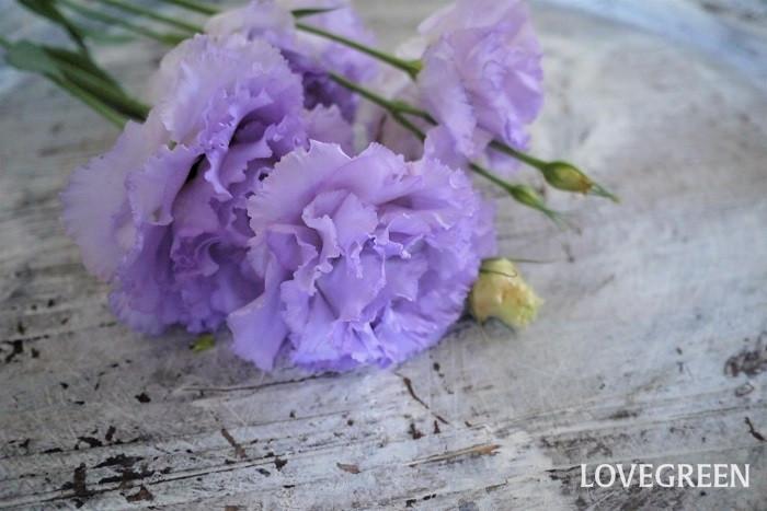 トルコキキョウは1本にたくさんの花を咲かせる、とても豪華な花です。別名をリシアンサスとも言います。淡い花色の品種も多く、暑い夏に涼し気な雰囲気を演出してくれます。トルコキキョウもとても長持ちする花です。