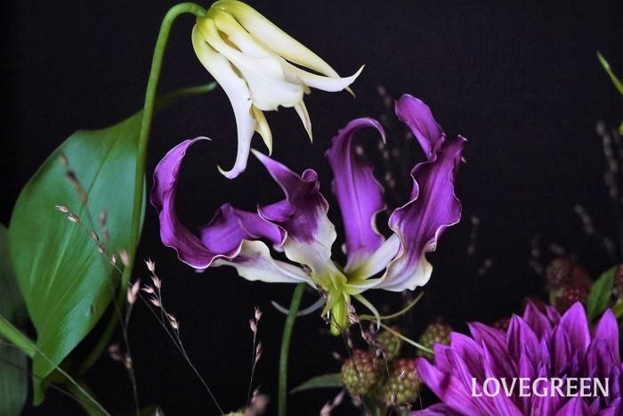 ジニアは別名を百日草というくらい長く咲き続ける花です。切り花にしても長くきれいな姿を見せてくれます。詰め込むように生けるとカビが発生することがあります。ゆったりと生けるようにしましょう。