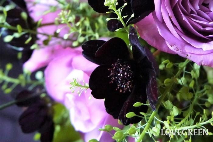 チョコレートコスモスは切り花でも人気の花。チョコレート色の花はアレンジメントや花束の中で名脇役として存在感を発揮します。もちろんチョコレートコスモスだけを生けても楽しめます。チョコレートコスモスの切り花の生け方のコツや萎れてしまったときの対処法を紹介します。  生け方のコツ チョコレートコスモスの生け方のコツは茎の中の道管を潰さないようにカットすることです。