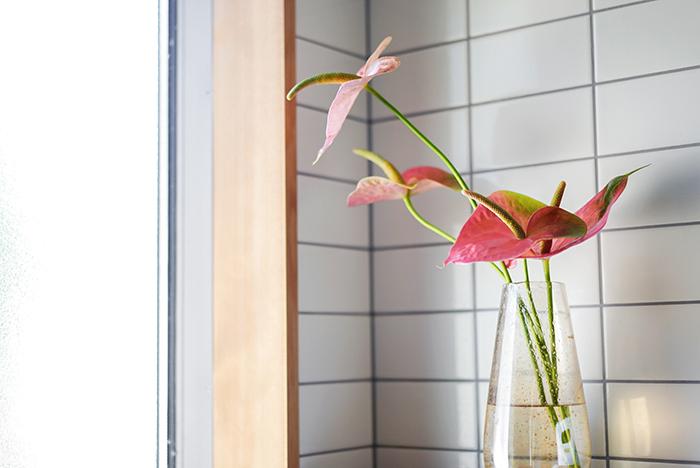 """今回ご紹介するおすすめの品種は、""""プレジデント""""という名前のアンスリウム。全体的にピンク色ながら、ふちの部分がグリーンがかっているニュアンスカラー。ハート形のお花で、出荷の時期によって花の色の出方や、その時々で形も個性があるので「この花のこの向きが、かわいいな♡」と、オンリーワンの1輪を見つけて、手に取るのが楽しみなお花です。  千葉県にある大佐和花卉園さんは、アンスリウムで日本を代表する生産者さんですが、中でもプレジデントは人気の品種。先日農園でのプレジデントの様子を送ってくださいました。"""