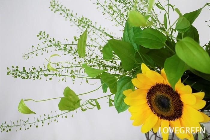 自宅でできる夏に切り花を長持ちさせるコツのお話です。コツを覚えて上手に花を長持ちさせてください。  水換え 花瓶の水換えは毎日行うのがコツです。毎朝、毎晩換えてもいいくらいです。夏は水が腐りやすい季節。2日水換えを行わないだけで、ずいぶんと水が傷みます。  水換えの際は花瓶の中もきれいに洗います。この時茎がぬるぬるしているようであれば流水で洗い流しましょう。 さらに夏は花瓶の水を少なめにしましょう。すべての茎が5~10cm程度水に浸かっていれば十分です  切り戻し 切り戻しとは、茎の先端を1cm程度切り戻すことを言います。切り戻しは水換えの度に行いましょう。切り戻しは切り口の鮮度を保つコツです。水の吸い上げを良くする他、雑菌が発生しにくくなります。  氷 花瓶の水に氷を入れる方法です。氷を入れることによって水の温度が下がるので、雑菌が発生しづらくなります。氷を入れるタイミングは環境によりますが、就寝時や外出時などクーラーを切ってしまうような時に氷を入れると効果があります。  延命剤 切り花延命剤は切り花が長くきれいに咲き続けるために必要な栄養が入っています。切り花延命剤を入れると長持ちするのはこのためです。切り花延命剤は水換えの度に入れるようにしましょう。また、水の量に対して規定されている量を入れないと効果が得られないこともあります。用量用法を守って使用してください。  漂白剤 花瓶の水に漂白剤を入れる方法もあります。漂白剤を入れることで水の中の雑菌が繁殖しにくくなるという方法です。漂白剤を使用しても雑菌の繁殖を完全に防げるわけではありません。水換えはこまめに行いましょう。また、花の種類によっては色褪せてくることもあるので注意が必要です。