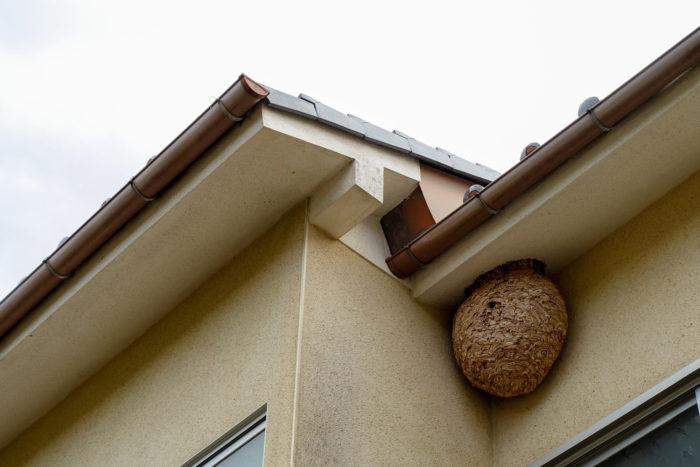 ――家周りですと、玄関や軒下などが多いですね。また、前年に巣が作られた場所も要注意です。夏の活動ピーク時期には1,000匹を超える働きバチがいる巨大な巣になることもあります。この時期は巣を守ろうとして特に狂暴になるので、巣を見つけても安易に近づかないようにしてください。