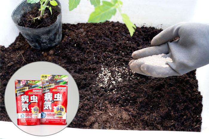 家庭菜園の植え付け時の害虫予防に「ベニカⅩガード粒剤」