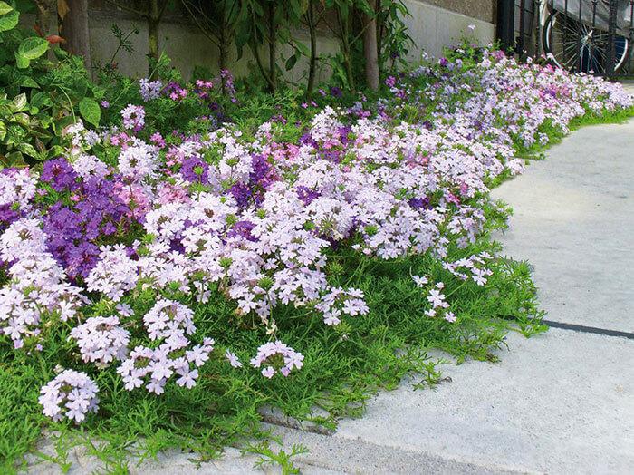 グランドカバーは、必ずしもお庭全面を覆う必要はありません。たとえば雑草が生えやすい一角にだけタピアンを植えれば、防草をしながら美しいお庭のアクセントにもなりますよ。