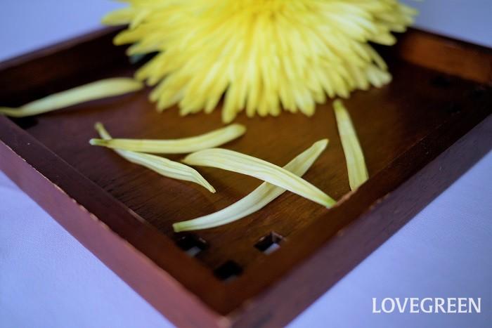 菊の英名を紹介します。  Chrysanthemum Mum 菊の学名である「Chrysanthemum」がそのまま英語になっていました。