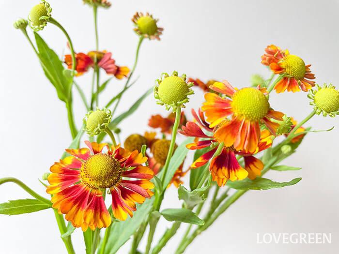 色は黄色やオレンジなど。秋らしい暖色系の色合いです。