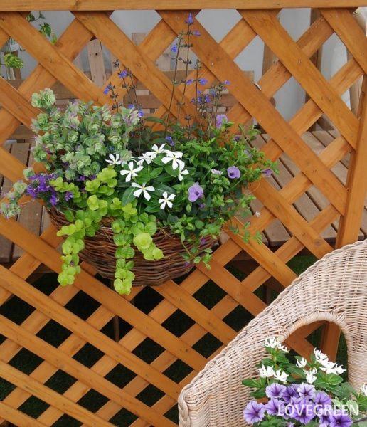 夏の蒸れに弱い草花は、風通し良く育てることができるハンギングバスケットに植えることもおすすめ。高い位置に飾ることで、病害虫の心配も少なくなり、目線の高い位置にフォーカルポイントをつくることができます。