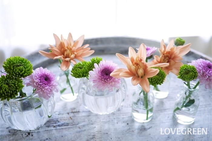 観賞用に育てられる菊は花のサイズと咲き方で大きく分けられています。大まかな分類を紹介します。  大菊 花茎18cm以上のものが大菊と言われます。  厚物 花びらに厚みがあり、中心部が盛り上がるようにこんもりと咲く菊です。  厚走り 厚物から外側の花びらが流れ出るように広がっている咲き方です。  管物 花びらが筒状になっている菊です。  美濃菊 厚物に比べて平たく花びらが広がるような咲き方の菊です。  中菊 花茎9cm以上のものを中菊と言います。  江戸菊 花が開いてから、中心に向かって花びらを抱え込むように咲く菊です。  伊勢菊 花びらが滝のように下垂して咲く菊です。中心部は見えないのが特徴です。  嵯峨菊 咲き始めは花びらが縮れたようになり、咲き進むに従って開いていく菊です。  丁子菊 花の中心が毬のように盛り上がっている咲き方の菊です。  小菊 花茎9cm以下のものを小菊と言います。小菊は主に盆栽仕立てで育てられます。大きな滝が流れ落ちるように小花が咲く姿は、とても豪華で圧倒されます。  スプレーマム 枝分かれしてスプレー状に花が咲く菊です。欧米で改良された品種です。1本に複数の花が咲きます。花はマーガレットのような可愛らしいものや、ピンポンマムと呼ばれるころりとした毬のようなものまであります。  ポットマム 名前の通り鉢植え用の菊です。海外で作出された品種で、手間がかからず鉢植えで育てやすいのが特徴です。