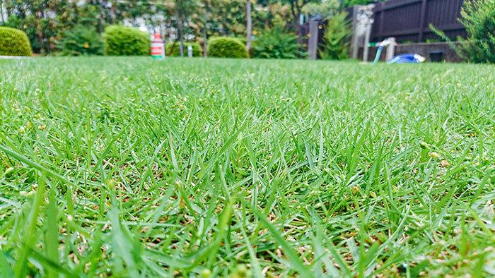 活力剤と肥料の違い、液体肥料と固形肥料の違いを正しく知り、芝生の状態やシーンによって、活力剤と肥料をうまく使い分けることが、理想の芝生像に近づく一歩となります。青々と広がる庭一面の芝生で、快適な庭空間を過ごしてくださいね♪